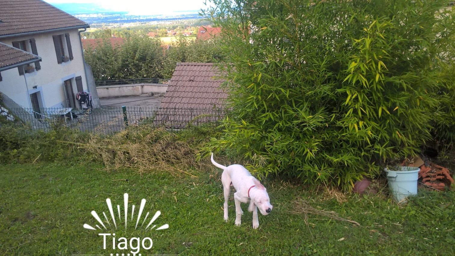 Yago (Tiago)