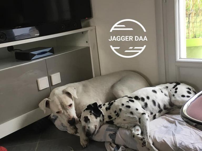 Jagger (refuge Fondation Assistance aux Animaux)