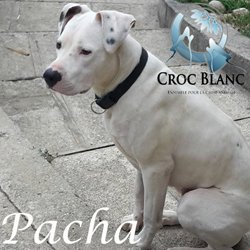 PACHAcrocblanc