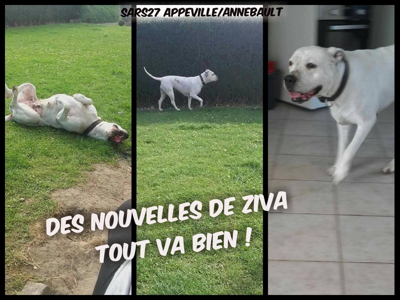 ZIVAsars27