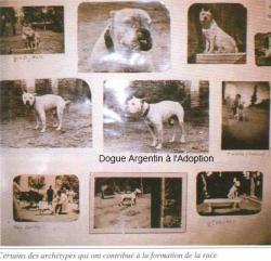Dogobaila14 1