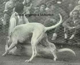 Dogobaila6