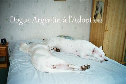 DOGUEARGENTINALADOPTION
