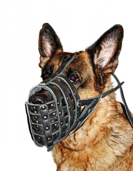 Maytre chien1 48