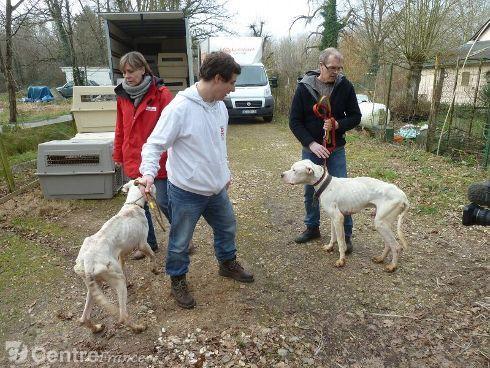 Saisie de chiens au royaume de diane 1945907