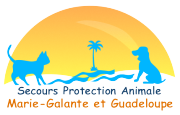 secours-protection-animale-guadeloupe.png